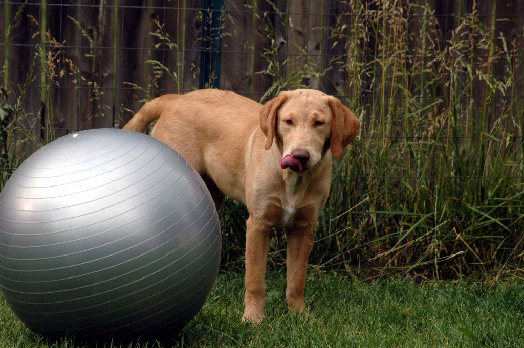 Exercise equipment: unwanted by me & confusing for dogs