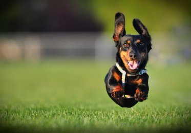 Concept of dog running fast - much like a good website